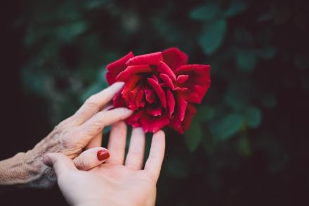 Older hand and a younger hand holding a rose